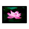 quadro lotus verde 60 x 40 qua0063 2