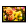 quadro flores de outono multicolor 60 x 40 qua0052 2